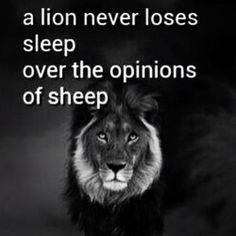 Lions vs. sheep