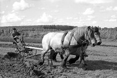 """When my great uncle Char got a tractor in the 50's he was asked how he liked it. """"Rained the other day. Creek came up. Tractor couldn't cross. Horses would have swum it."""""""