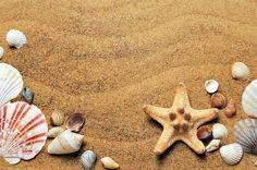 Sea, Sand, Coast, Beach, Seashells