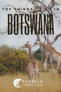 Top Things to Do in Botswana — Acanela Expeditions Africa Destinations, Top Travel Destinations, Travel Tips, African Vacation, All About Africa, Animal Tracks, Safari Adventure, Air Balloon Rides, Sustainable Tourism