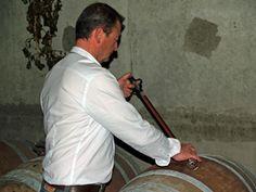 Dégustation du vin sur la barrique au Domaine Stentz-Buecher #GourmetOdyssey