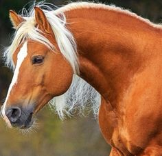 Such a pretty horse and a perfectly white mane.