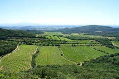 Le Gard rhodanien est connu pour la qualité de ses vins. Ici, les plaines de Chusclan Le Gard, Vineyard, Outdoor, Tourism, Outdoors, Outdoor Games