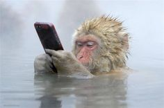 PetsLady's Pick: Funny Tech Monkey Of The Day ... see more at PetsLady.com ... The FUN site for Animal Lovers