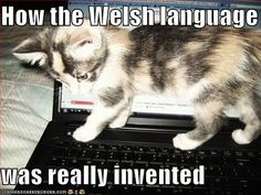 Funny Quotes About Life Humor Lol Hilarious Language Ideas Welsh Sayings, Welsh Words, Scottish Sayings, Learn Welsh, Funny Images, Funny Pictures, Animal Pictures, Happy Birthday Funny Cats, Welsh Language