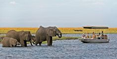Boat cruising on the Chobe National Park