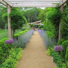 Provence inspired. Lavender, Lady's Mantle, Wisteria etc. gravel walkway.