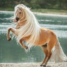 Die 2610 Besten Bilder Von Schöne Pferdebilder In 2019