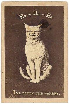 Ha-Ha-Ha cat matchbox