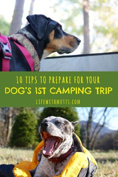 camp with dogs Are you planning your first camping trip with your dog Preparation is key! Here are 10 tips to make sure your first dog camping trip is a success. Guard Dog Training, Dog Training Tips, Potty Training, Training Schedule, Crate Training, Camping Hacks, Camping Checklist, Camping Meals, Camping Essentials