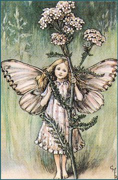 """Vintage print 'The Yarrow Fairy' by Cicely Mary Barker from """"The Book of the Flower Fairies""""; Poem and Pictures by Cicely Mary Barker, Published by Blackie & Son Limited, London [Flower Fairies - Summer] Cicely Mary Barker, Gravure Illustration, Fantasy Illustration, Fantasy Magic, Fantasy Art, Flower Fairies Books, Fairy Pictures, Vintage Fairies, Ouvrages D'art"""