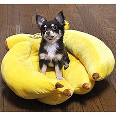 Fun, Funky pet bed shaped like a bunch of bananas. Perfect Banana Dog Bed for your little monkey