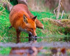 A Wildlife Photographer Shared This Beautiful Picture To Put People Off Fox-Hunting
