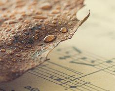 Autumn Poetry by VinaApsara on DeviantArt Poetry, Deviantart, Autumn, Fine Art, Photography, Lens, Style, Swag, Photograph