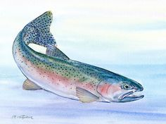 Choose your favorite trout watercolor paintings from millions of available designs. All trout watercolor paintings ship within 48 hours and include a money-back guarantee. Watercolor Fish, Watercolor Paintings, Watercolors, Acrylic Paintings, Trout Tattoo, Watercolor Projects, Fish Drawings, Rainbow Trout, Animal Sketches