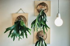 Confessions of a Pretoria Chique: Ginger and Fig Container Plants, Container Gardening, Cactus Y Suculentas, Blog Deco, Plant Wall, Dream Garden, Botany, Decoration, Plant Hanger