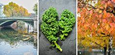 Grünkohlrezept für den Herbst