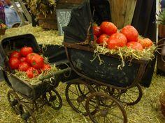 Tomatoes In Vintage Prams - Harrogate UK, Autumn Flower Show 2012.