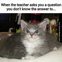 http://www.funnymeme.com/wp-content/uploads/2015/02/cat-memes-i-will-learn-it-for-tomorrow.jpg