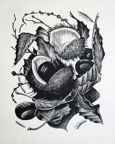 George Mackley (British, 1900-1983). Chestnuts. 1952. (wood engraving)