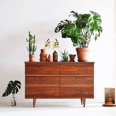 "2,435 gilla-markeringar, 20 kommentarer - We Love Plants (@weloveplantstlv) på Instagram: ""It's Friday, we're here till 1500 pop in say hi.  Pic by @thewhiitehouse  #plant #plants #green…"""