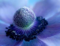 Google Image Result for http://img.designswan.com/2010/09/flower/10.jpg