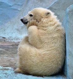 Просто грустнейший белый медведь