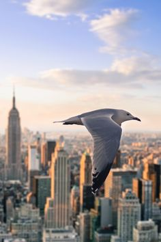Flying bird in NYC