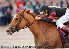 Ginger Punch (photo: Sarah Andrew/Equi-Photo)