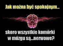 How to be calm, when all of the brain cells are nervous? Funny Quotes, Funny Memes, Bad Mood, Man Humor, Never Give Up, Motto, Lol, Sayings, Brain