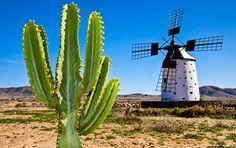 REISEKALENDER 2015: November: Der Kälte nach Fuerteventura entfliehen