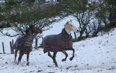 Your horses in the snow [PICS] - Horse & Hound Horse Pictures, Horse Love, Snow, Horses, Animals, Pictures Of Horses, Animales, Animaux, Equine Photography