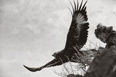 Les burkitshi sont des chasseurs d'aigles Kazakhs. Vivant dans les steppes de Mongolie, ces nomades perpétuent une tradition ancestrale. By Palani Mohan