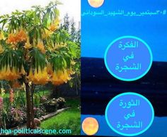 #Sudanese_Martyrs_Tree: The Idea is on the Tree, The Revolution is on the Tree. Ideas made by #Sudanese_journalist #Khalid_Mohammed_Osman