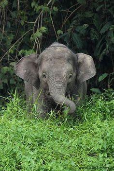 1000 images about imagenes de elefantes on pinterest - Fotos de elefantes bebes ...