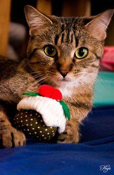 Cat  - Fleya on www.yummypets.com #cay #kitten #kitty #pussycat #meow #purr #animals #pets #Yummypets