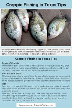 Crappie Fishing in Texas Tips: Although crappie is found across Texas, the best lakes for crappie are concentrated in the northeast near the Dallas/Fort Worth area. It is here that the crappie tends to be the most abundant and grow to considerable size thanks to the climate conditions. Crappie Fishing Tips, Fishing Tools, Fish Tank Design, Types Of Meat, Fish Farming, Good Fats, Freshwater Fish, No Carb Diets, Get Healthy