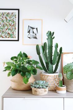 Room decoration using cactus is never ending. Starting from the real cactus, cactus displays, to the cactus made of stone. Methods, planting media, and pots used to plant cactus and important infor… Cacti And Succulents, Cactus Plants, Small Cactus, Cactus Flower, Cactus Art, Cactus Decor, Flower Vases, Plantas Indoor, Decoration Plante