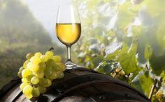 Wine tasting under the shadow of Meteora