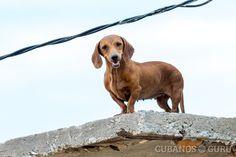 Para nadie es un secreto que en Cuba la situación de la comida es complica, así que imagínense qué podrá quedar para los #perros.