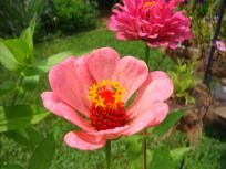 ~ Special~ Buy 8 packs of seeds for 13.00 see details Ships Free