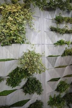 Image result for living plant wall concrete wall