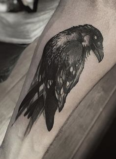 Phellipe Rodrigues Raven tattoo More