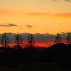 【nekotea_skywalker】さんのInstagramをピンしています。 《Poplar Trees At Sunset. Tokyo Mizumoto Park. 葛飾水元公園にて  #葛飾 #水元公園 #夕焼け #夕焼け空 #夕焼け雲 #グラデーション #森  #空 #tokyo #sunset #sunsets #sky #redsky #skyporn #forest #trees #park #japan #poplar #eyeem #eyeemoninstagram #gradation》