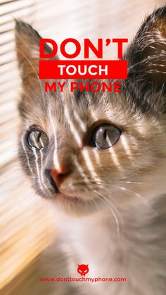 13 Cute Cats Mobile Wallpaper Ideas Mobile Wallpaper Cute Cat Wallpaper Wallpaper
