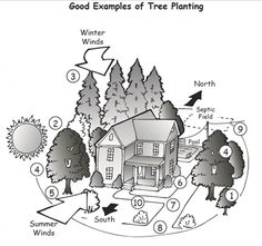 Tips on Where to Plant Trees