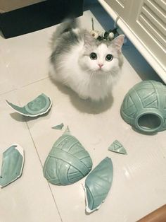 Cats Wallpapers ✧ Animals And Pets, Baby Animals, Funny Animals, Funny Pets, Cute Baby Cats, Cute Little Animals, Photo Chat, Cat Wallpaper, Funny Animal Pictures