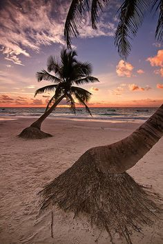 Postcard from Tulum | Mexico (by Todd Wall)