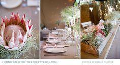 natural Horse Wedding, Wedding Cape, Chic Wedding, Rustic Wedding, Wedding Ceremony, Wedding Dreams, Reception, Protea Wedding, Wedding Flowers
