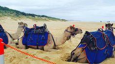 Camel Rides!  #camelridesatthebeachtoday #easternbeach #sandwatersky #amahliawanredaride #sobig #live #laugh #love #happy #heart #funinthesand #lovetheliveyoulive #livethelifeyoulove #happinessmattersmost #godisgood #godislove #godislife #beautifulday #beachday #dontworrybehappy #naturelovers #animallover by michala_morgz97 http://ift.tt/1JtS0vo
